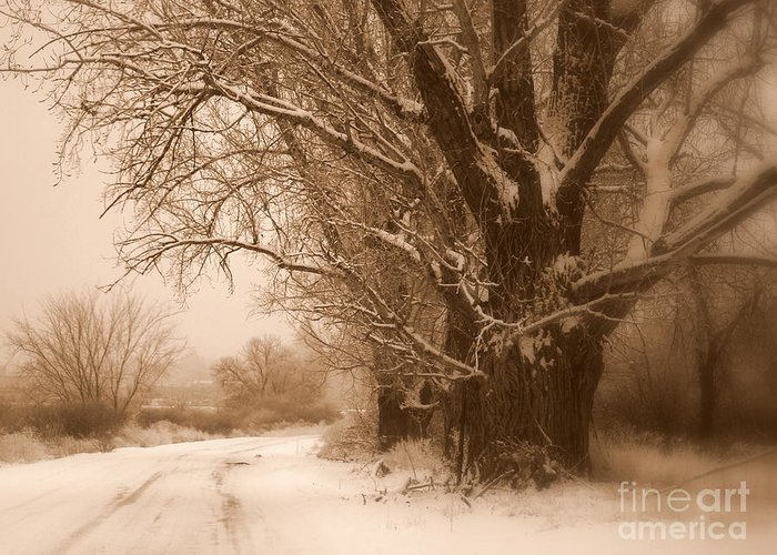 Prosser Greeting Card featuring the photograph Winter Dream by Carol Groenen