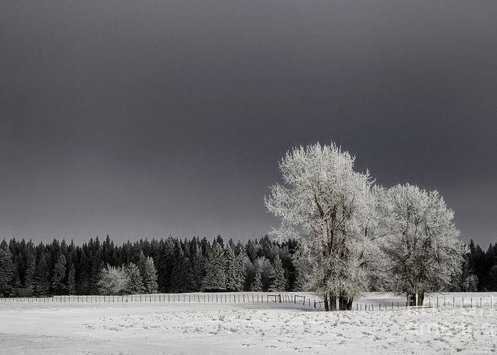 Dramatic Greeting Card featuring the photograph Winter Dreamscape by Brad Allen Fine Art
