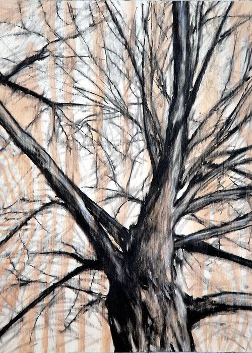 Tree Greeting Card featuring the drawing Winter Elm by John Terwilliger
