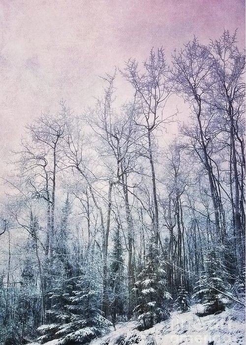 Birch Forest Photographs Greeting Cards