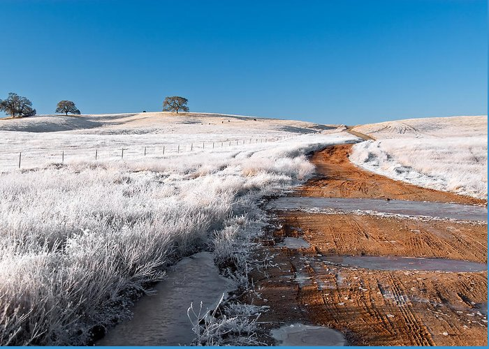 Color Greeting Card featuring the photograph Winter Frost by Larry Young