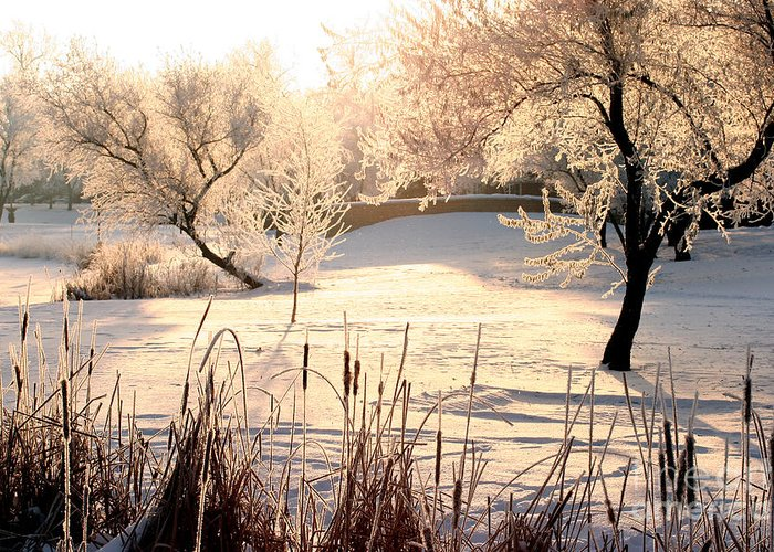 Winter Landscape Greeting Card featuring the photograph Winter Frost by Steve Augustin