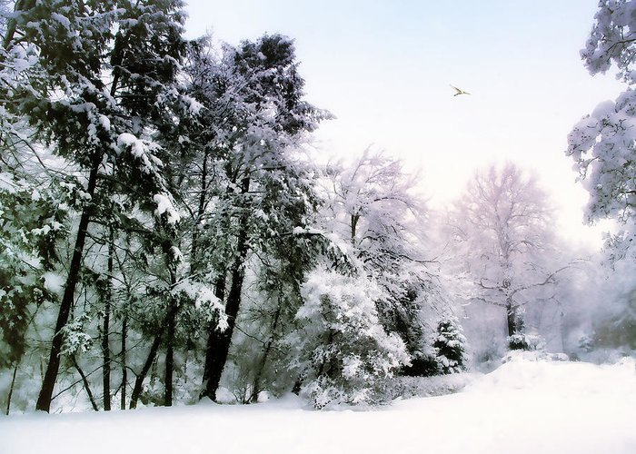 Winter Greeting Card featuring the photograph Winter Impressions by Jessica Jenney