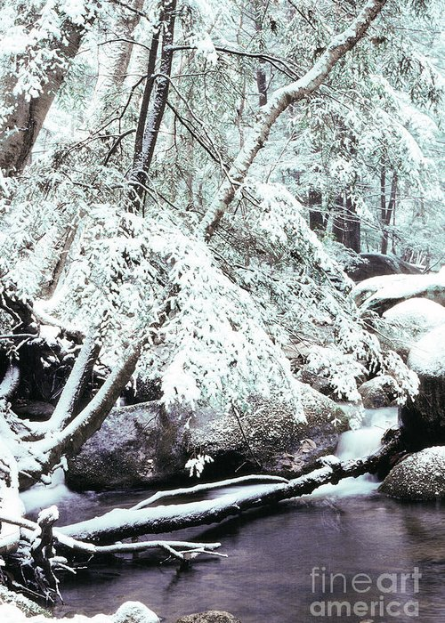 Virginia Greeting Card featuring the photograph Winter In Shenandoah by Thomas R Fletcher