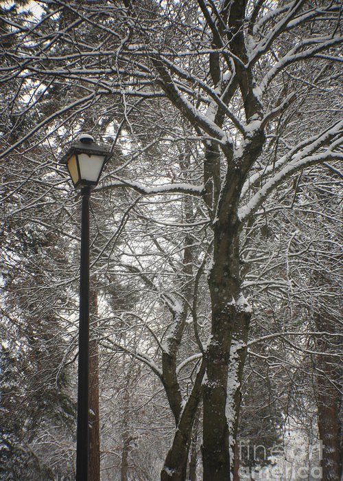 Lamp Greeting Card featuring the photograph Winter Lamp Post by Idaho Scenic Images Linda Lantzy