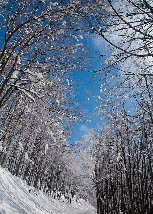 Mountain Greeting Card featuring the photograph Winter Road by Evgeni Dinev
