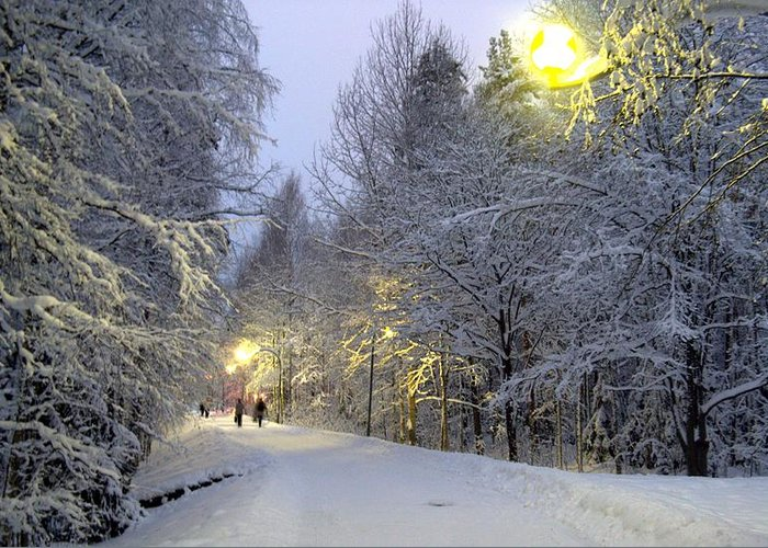 Winter Greeting Card featuring the photograph Winter Scene 5 by Sami Tiainen