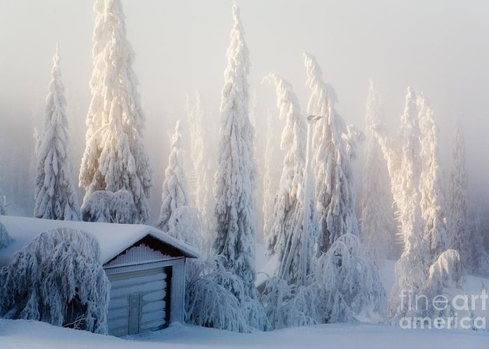 Beautiful Greeting Card featuring the photograph Winter Scene by Kati Finell