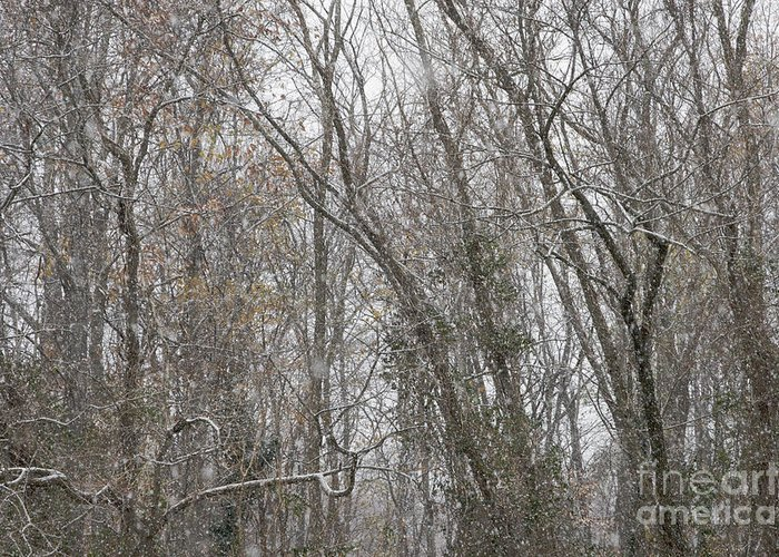 Winter Greeting Card featuring the photograph Winter Scenery by Hideaki Sakurai
