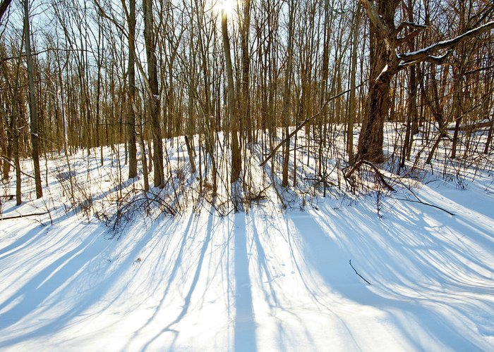 Bath Nature Preserve Greeting Card featuring the photograph Winter Shadows by Tim Fitzwater