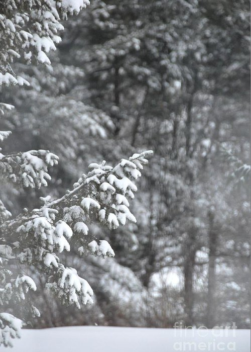 Snow Greeting Card featuring the photograph Winter Snow by John Black