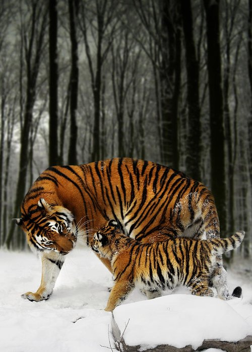 Tiger Greeting Card featuring the digital art Winter Stroll by Julie L Hoddinott
