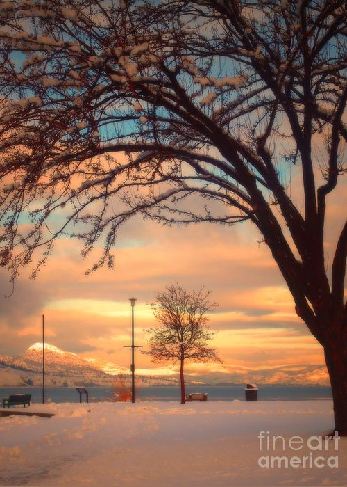 Winter Greeting Card featuring the photograph Winter Sunrise by Tara Turner
