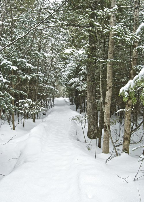 Raw Greeting Card featuring the photograph Winter Trail 2200 by Michael Peychich