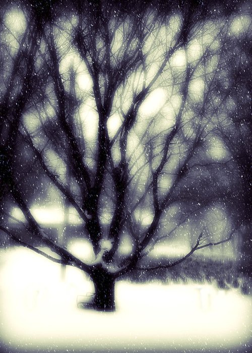 Tree Greeting Card featuring the photograph Winter Tree 3 by Perry Webster