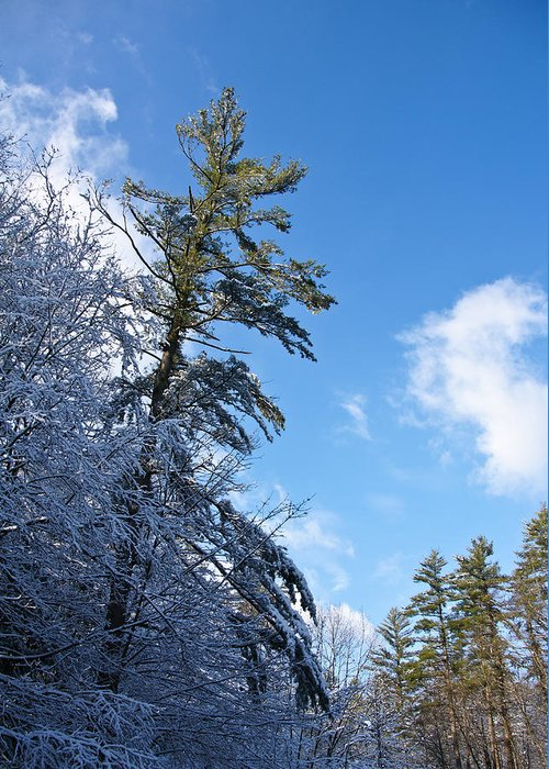 Winter Greeting Card featuring the photograph Winter Tree And Sky by Edward Myers