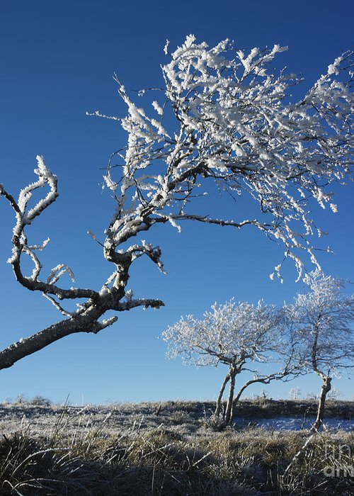 Bare Tree Greeting Card featuring the photograph Winter Tree. by Bernard Jaubert