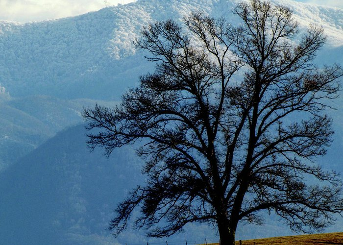 Nature Winter Mountains Snow Landscape Country Greeting Card featuring the photograph Winter Tree by Judy Baird