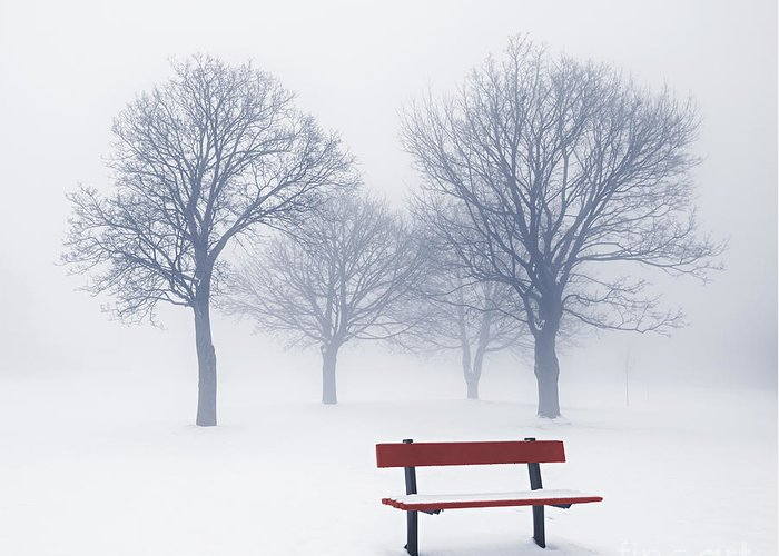 Trees Greeting Card featuring the photograph Winter Trees And Bench In Fog by Elena Elisseeva