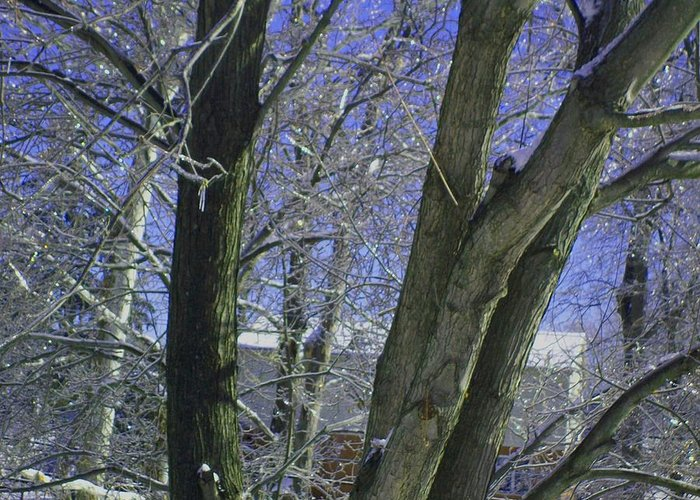Tree Greeting Card featuring the photograph Winter Trees by Misty VanPool
