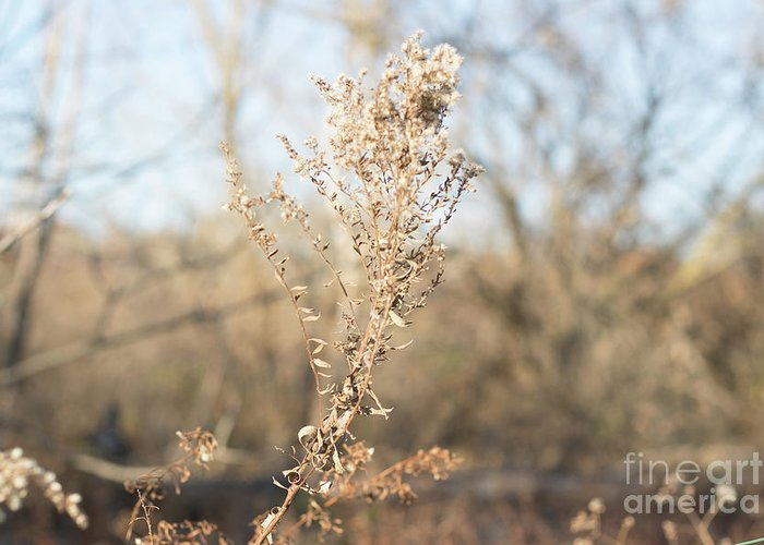 Winter Greeting Card featuring the photograph Winter Weeds by Howard Roberts