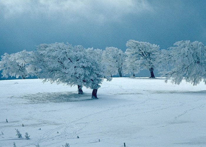 Winter Greeting Card featuring the photograph Winter Wonderland by Flavia Westerwelle