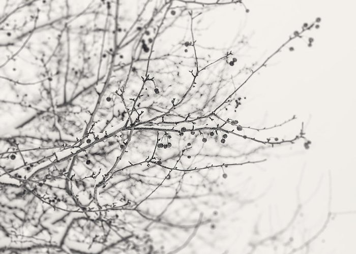 Nature Greeting Card featuring the photograph Winter's Berries In Black And White by Lisa Russo