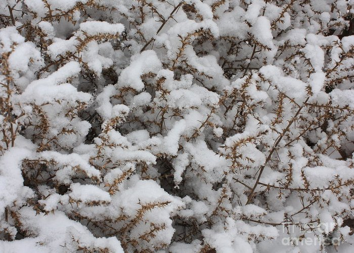 Snow Greeting Card featuring the photograph Winter's Contrast by Carol Groenen