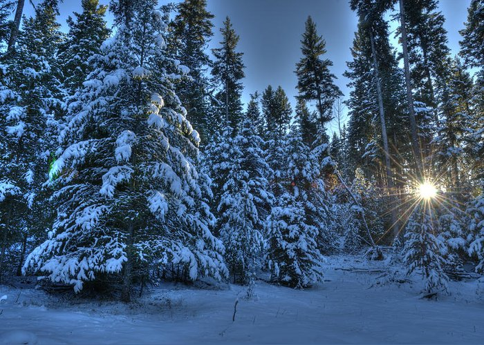 Winter Greeting Card featuring the photograph Winter's Glow by Peter Olsen