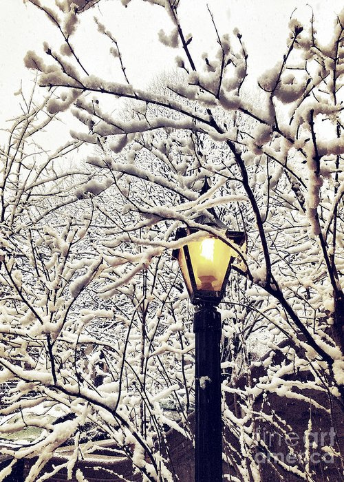 Snow Greeting Card featuring the photograph Wintry Boughs by Onedayoneimage Photography