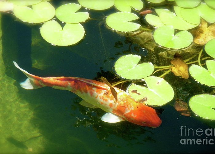 Koi Greeting Card featuring the photograph Wisdom by Amy Strong