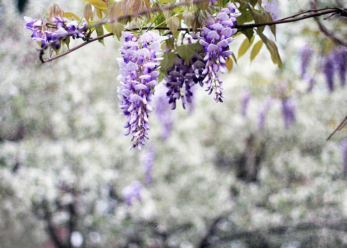 Aromatherapy Greeting Card featuring the photograph Wisteria by Darren Fisher