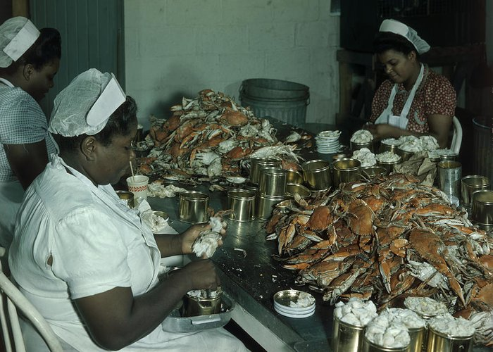 Indoors Greeting Card featuring the photograph Women Pick And Pack Crab Meat Into Cans by Robert Sisson
