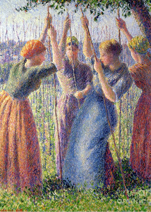 Woman; Women; Plant; Pea; Growing; Peas; Farming; Crop; Cropping; Impressionist; Realist; Landscape; Femmes; Femme; Plantant; Pois; Petit; Petits; Planting; Peasticks Greeting Card featuring the painting Women Planting Peasticks by Camille Pissarro