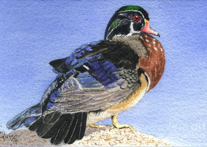 Duck Greeting Card featuring the painting Wood Duck by Lynn Quinn