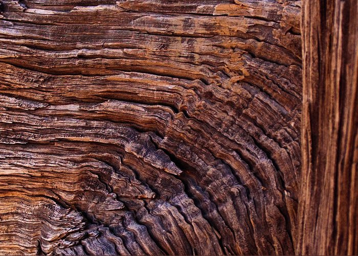 Wood Greeting Card featuring the photograph Woodgrain by Jim Cole