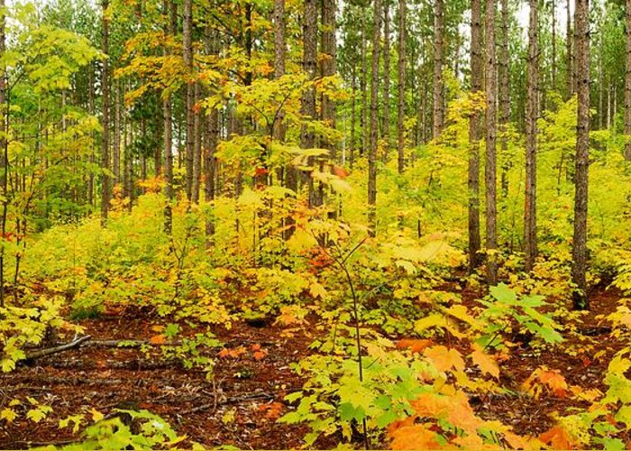Woods Greeting Card featuring the photograph Woodland Panorama by Michael Peychich