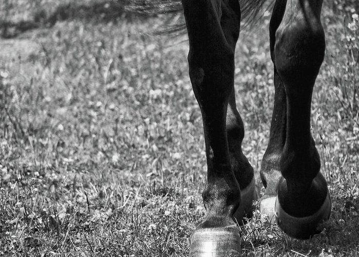 Horse Greeting Card featuring the photograph Working Trot by JAMART Photography