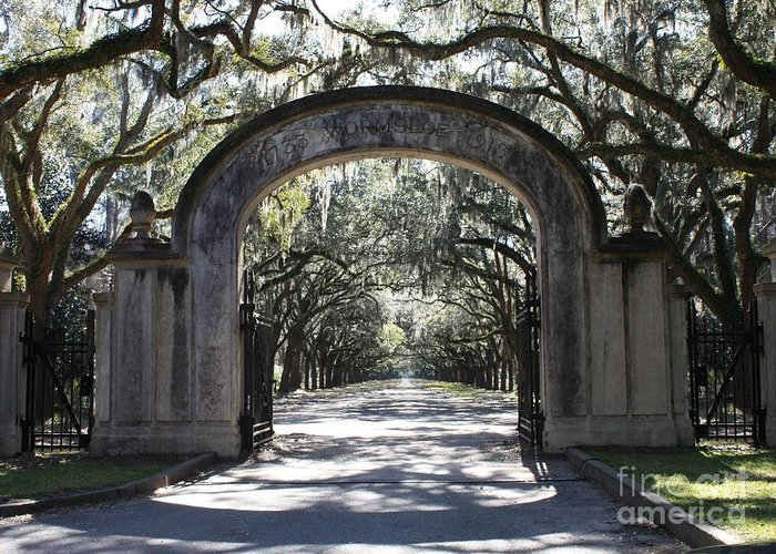 Gate Greeting Card featuring the photograph Wormsloe Plantation Gate by Carol Groenen