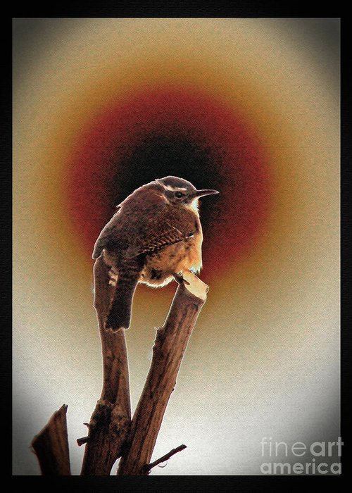 Wren Greeting Card featuring the photograph Wren At Sundown by Sue Melvin