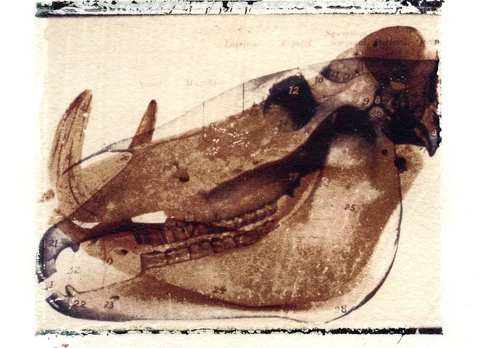 Polaroid Transfer Greeting Card featuring the photograph X Ray Terrestrial No. 6 by Jane Linders
