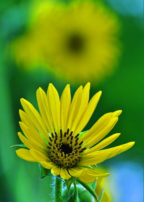 Flower Greeting Card featuring the photograph Yellow And Green 3 by Peter McIntosh