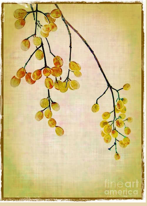 Yellow Greeting Card featuring the photograph Yellow Berries by Judi Bagwell