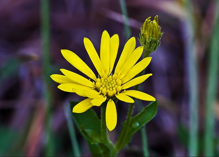 Landscape Greeting Card featuring the photograph Yellow Camphorweed by Michael Whitaker