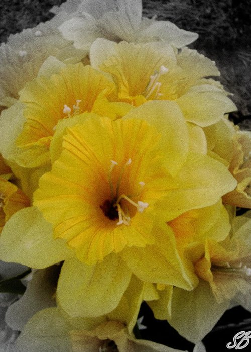 Flowers Greeting Card featuring the photograph Yellow Days by Sarah Bauer