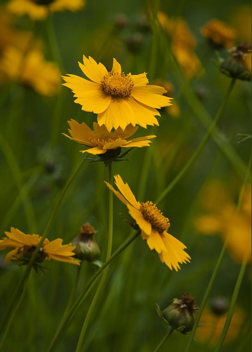 Flower Greeting Card featuring the photograph Yellow Flower by Chad Davis