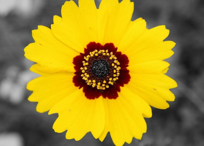 Flower Greeting Card featuring the photograph Yellow Flower by Dana Blalock