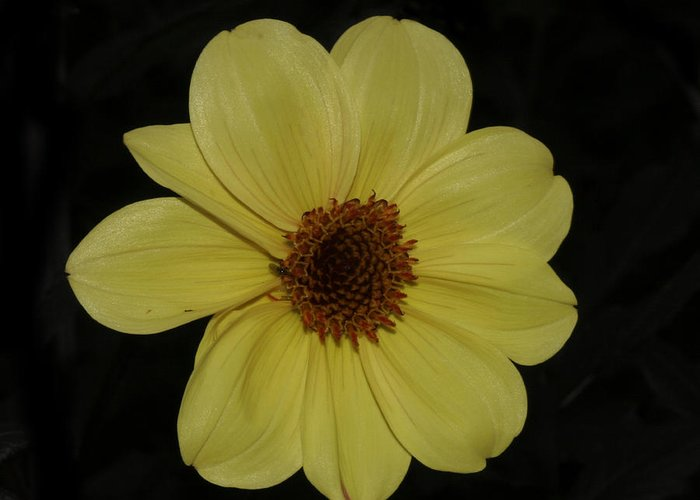 Flower Greeting Card featuring the photograph yellow Flower by Masami Iida