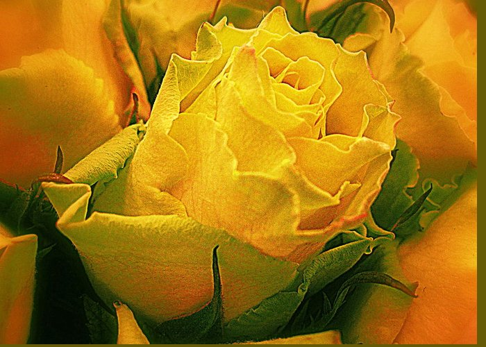 Flowers Greeting Card featuring the photograph Yellow Green Rose by Bonita Brandt