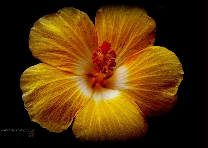 Flower Greeting Card featuring the photograph Yellow Hi by Kathy Barney